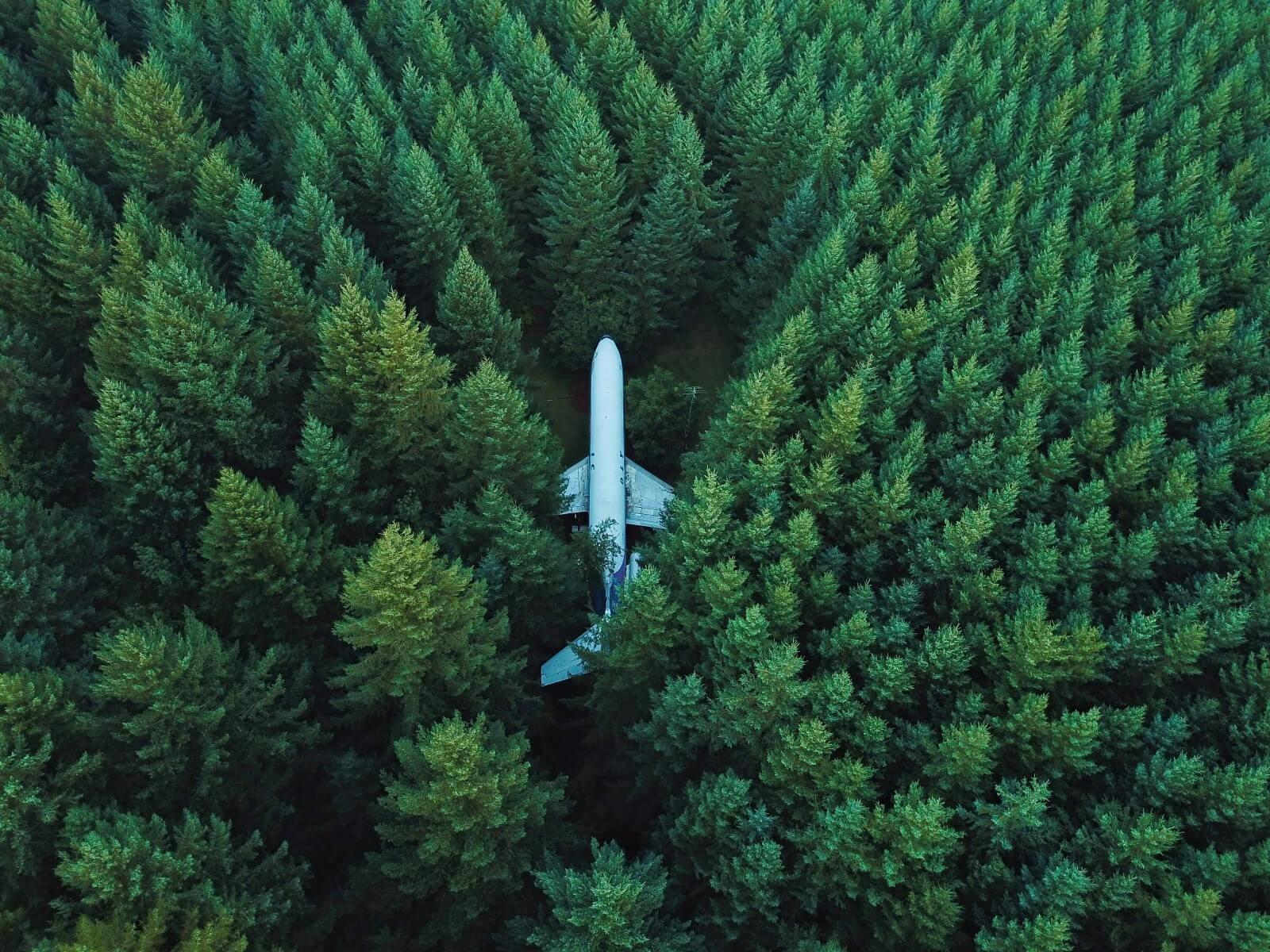 Vliegtuig in het bos