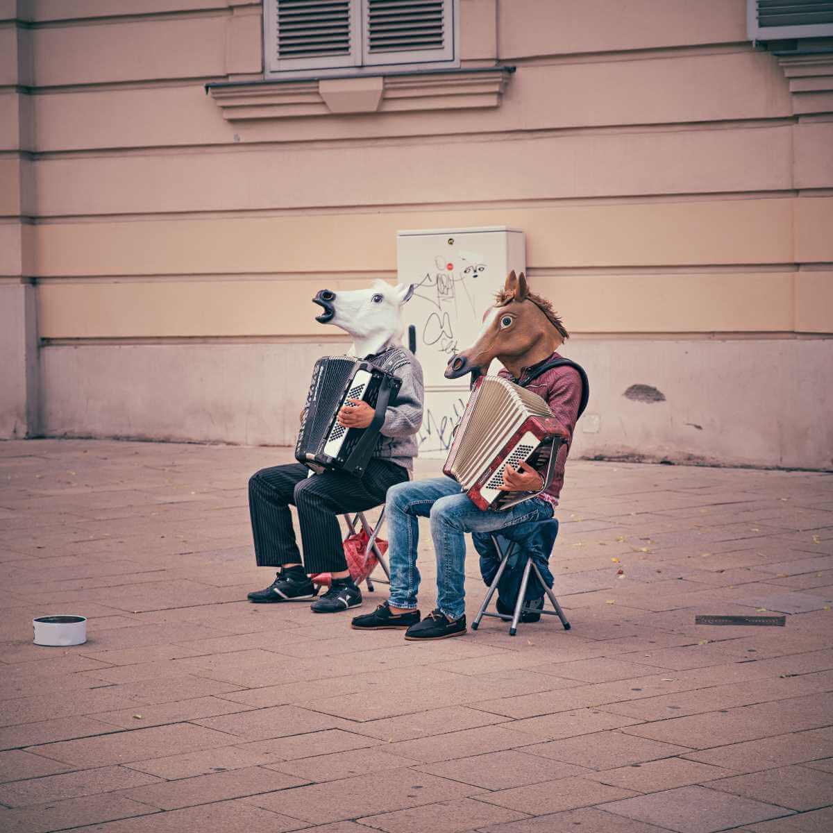 Paarden spelen accordeon
